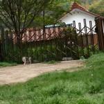 猫さん入口付近-150x150