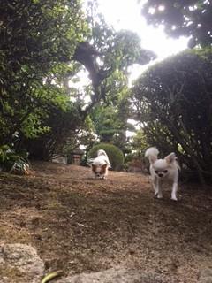 もえちゃんりえちゃんお庭遊び