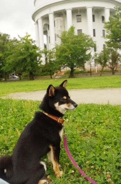 朝の散歩2