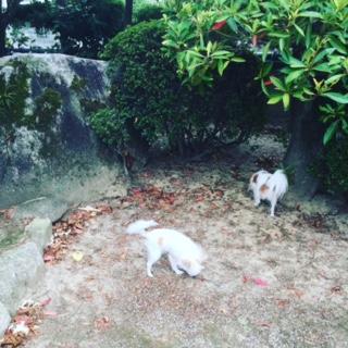 もえりえちゃんお庭1